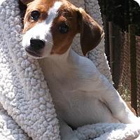 Adopt A Pet :: Caitlyn - Foster, RI