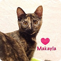 Adopt A Pet :: Makayla - Foothill Ranch, CA