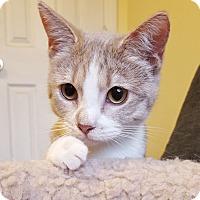 Adopt A Pet :: Champagne - Marietta, GA