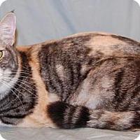 Adopt A Pet :: Daisy - Fullerton, CA