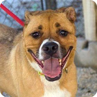 Boxer/Retriever (Unknown Type) Mix Dog for adoption in Decatur, Georgia - OAKLEY