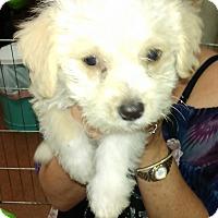 Adopt A Pet :: Jack - Thousand Oaks, CA
