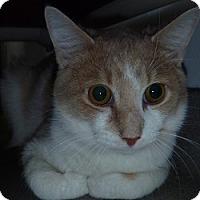 Adopt A Pet :: Theodore - Hamburg, NY