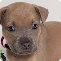 Adopt A Pet :: Lei - Savannah, GA