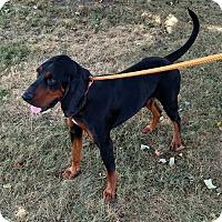 Adopt A Pet :: Elijah - Sweetwater, TN