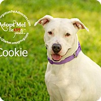 Adopt A Pet :: Cookie - Pearland, TX