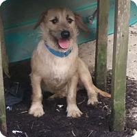Adopt A Pet :: Abe - Providence, RI