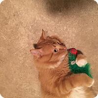 Adopt A Pet :: Kenny - Hanna City, IL