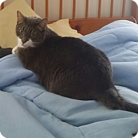 Adopt A Pet :: Ruby (COURTESY POST) - Baltimore, MD