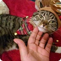 Adopt A Pet :: DAISY - Whitestone, NY