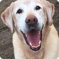 Adopt A Pet :: Pogi - San Francisco, CA
