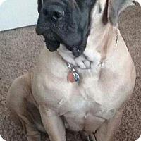 Adopt A Pet :: Coco - Yakima, WA