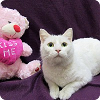 Adopt A Pet :: ENYA - Lexington, NC