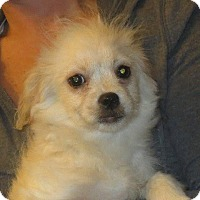 Adopt A Pet :: Peter - Rochester, NY