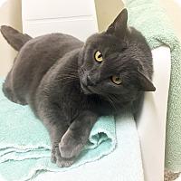 Adopt A Pet :: Jasmine - Eastsound, WA