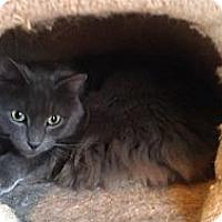 Adopt A Pet :: Earl (MP) - Little Falls, NJ