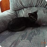 Adopt A Pet :: Angel - Saint Albans, WV