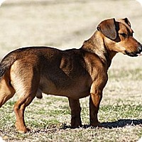 Adopt A Pet :: Toby - Glenpool, OK
