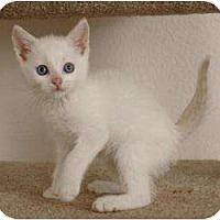 Adopt A Pet :: Jiff - Sacramento, CA