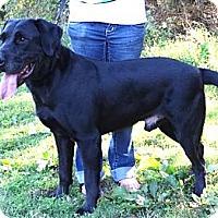 Adopt A Pet :: *Corbin - PENDING - Westport, CT