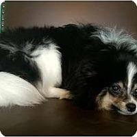 Adopt A Pet :: Pepe - Hilliard, OH