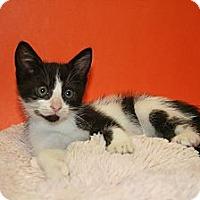 Adopt A Pet :: JORDAN - SILVER SPRING, MD