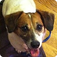 Adopt A Pet :: Wilbur - North Olmsted, OH