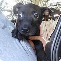 Adopt A Pet :: Mars - Gainesville, FL