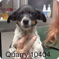 Adopt A Pet :: Quarry - baltimore, MD