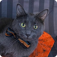 Adopt A Pet :: Lilly Anne - Muskegon, MI