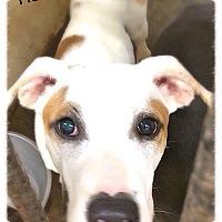 Adopt A Pet :: Rocko - Boston, MA