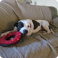 Adopt A Pet :: Schookeems - San Diego, CA