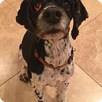 Adopt A Pet :: HIGGINS - Hurricane, UT