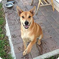 Adopt A Pet :: Luna - Homestead, FL