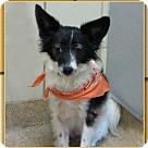 Adopt A Pet :: Peaches CJ in AR