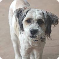 Adopt A Pet :: Darryl - Norwalk, CT