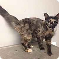 Adopt A Pet :: Tori - Okmulgee, OK