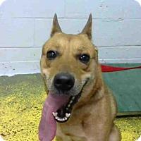Adopt A Pet :: JACK DOG - Atlanta, GA
