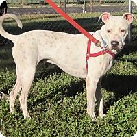 Adopt A Pet :: Sam Hawkins - Georgetown, TX