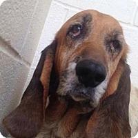 Adopt A Pet :: Kloey - Albuquerque, NM