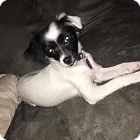Adopt A Pet :: Dinah - DeForest, WI