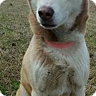 Adopt A Pet :: Aurelia