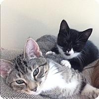 Adopt A Pet :: Annie & Joey - Winchendon, MA
