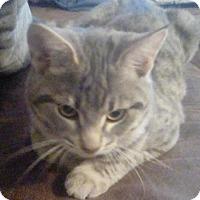 Adopt A Pet :: Sweetie - Pompano beach, FL