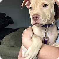 Adopt A Pet :: Honey/Minnie - Baltimore, MD
