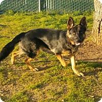 Adopt A Pet :: APOLLO - San Martin, CA