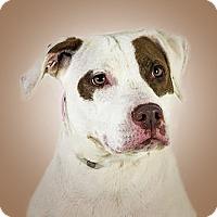 Adopt A Pet :: Chelsea - Prescott, AZ