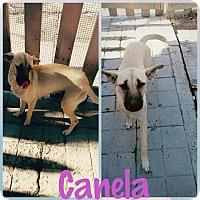 Adopt A Pet :: Canala - LAKEWOOD, CA