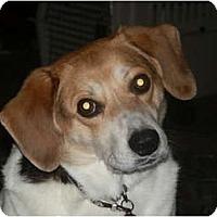 Adopt A Pet :: Petey - Palmyra, WI