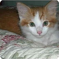 Adopt A Pet :: Tangerine - Arlington, VA